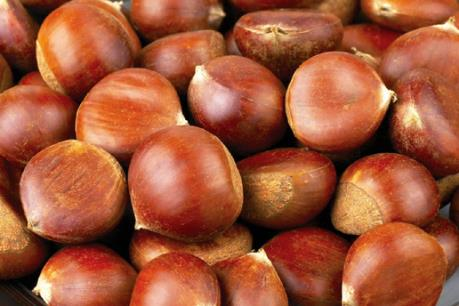 440 tấn hạt dẻ đang tạm giữ tại Lào Cai có nguồn gốc từ đâu?
