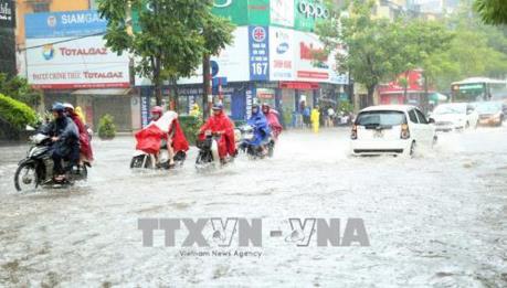 Hà Nội cắt sửa 965 cây xà cừ trước mùa mưa bão