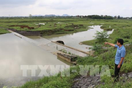 Xác lợn vứt ra môi trường: Một Chủ tịch xã bị kiểm điểm