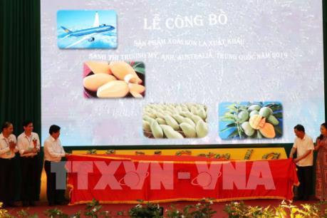 Xoài Sơn La khởi hành sang Mỹ, Anh, Australia và Trung Quốc