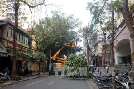 Hà Nội cắt tỉa cây xanh ở hơn 200 tuyến đường, phố