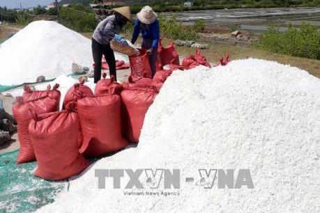 Diêm dân Thanh Hóa bỏ hoang ruộng muối để tìm việc khác mưu sinh