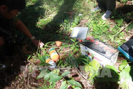 Bắt được kẻ cầm đầu phá rừng thông ở Lâm Đồng