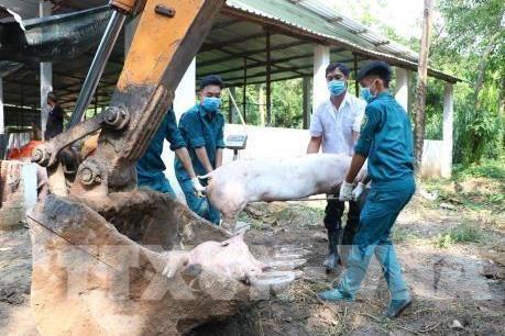 Công điện của Thủ tướng về phòng chống dịch tả lợn châu Phi