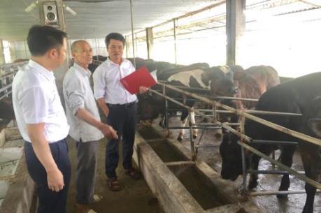 Hướng nông dân đến sản xuất lớn
