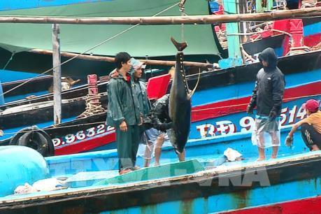"""Khắc phục """"thẻ vàng"""" IUU để nghề cá Việt Nam tiếp cận EVFTA"""