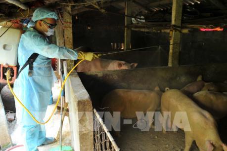 Thanh Hóa kiểm soát vận chuyển lợn và sản phẩm từ lợn
