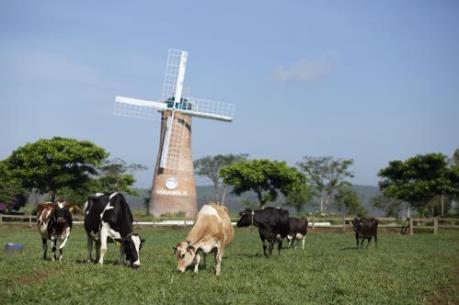 Dấu ấn chăn nuôi bò sữa công nghệ cao mang tên Vinamilk