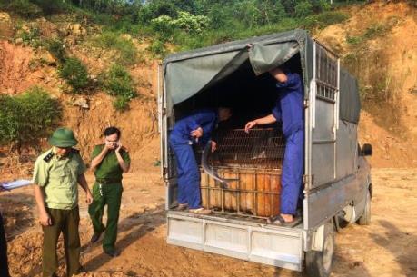 Phát hiện 400 kg cá tầm nhập lậu từ Trung Quốc