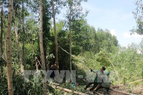 Tạo nguồn nguyên liệu gỗ - Bài 2: Khuyến khích nhưng chưa đủ sức hút với người dân