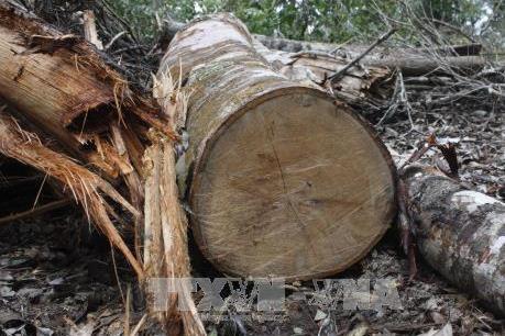 Gia Lai: Khởi tố, bắt tạm giam đối tượng khai thác gỗ trái phép