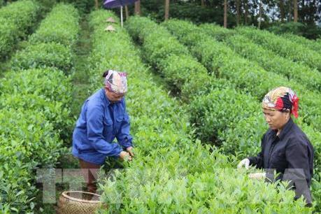 Tp. Hồ Chí Minh tìm giải pháp phát triển kinh tế tập thể nông nghiệp