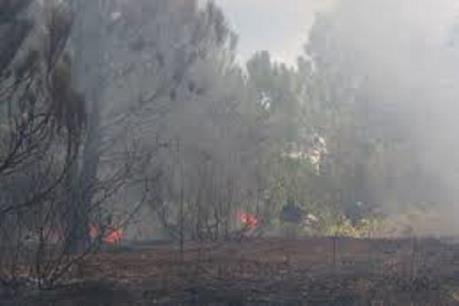 Bình Định: Cháy lớn thiêu rụi hơn 2 ha cây bụi ở khu du lịch Kỳ Co