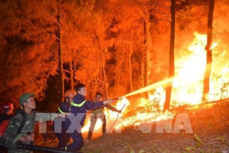 Thủ tướng ra Công điện về các biện pháp cấp bách phòng cháy, chữa cháy rừng