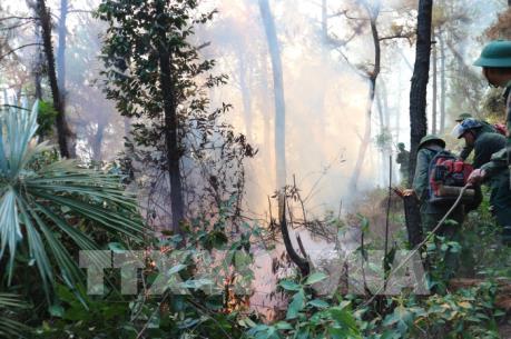 Cháy rừng tại huyện Nghi Xuân, Hà Tĩnh bùng phát trở lại
