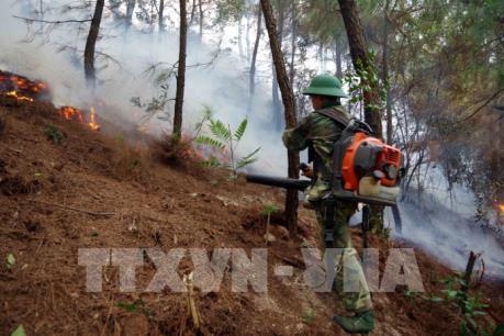 """""""Mưa vàng"""" cứu nguy sản xuất nông nghiệp, ngăn chặn cháy rừng"""