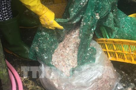Thương lái thu mua vảy cá lóc khiến giá tăng liên tục