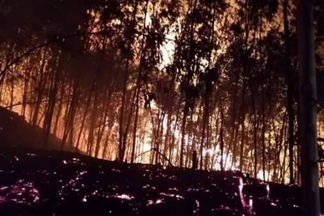 Phó Chủ tịch tỉnh Bình Định: Xảy ra cháy phải truy cho được đối tượng gây cháy