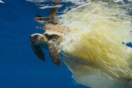 Côn Đảo: Cứu sống rùa biển quý hiếm bị mắc kẹt vào rác thải nhựa
