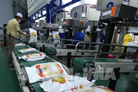 Gạo Việt Nam và Thái Lan chật vật cạnh tranh với giá gạo Ấn Độ