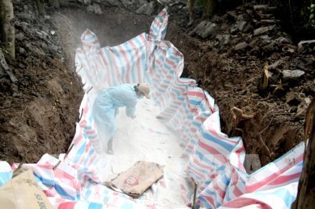 Tây Ninh xuất hiện ổ dịch tả lợn châu Phi đầu tiên