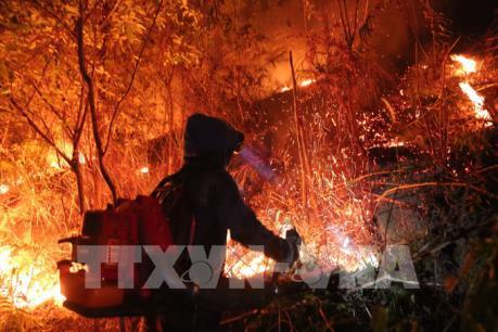 Khởi tố bị can vụ cháy rừng ở huyện Hương Sơn, Hà Tĩnh