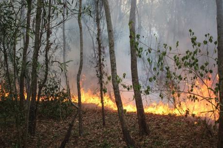 Quảng Ngãi: Xảy ra 2 vụ cháy rừng trong một ngày