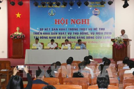 Hai phương án sản xuất lúa cho Đồng bằng sông Cửu Long