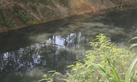 Tuyến kênh Tư Nghĩa ô nhiễm nghiêm trọng