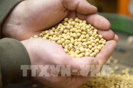 Giá nông sản Mỹ phần lớn tăng nhờ nhu cầu xuất khẩu cao