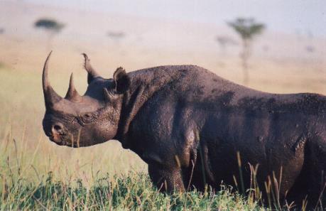 """Conservation Capital sắp phát hành trái phiếu """"bảo vệ động vật"""""""