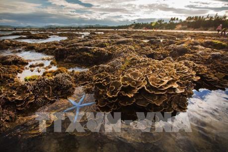 Ngắm san hô biển tuyệt đẹp ở Hòn Yến