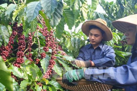 Đồng Nai đưa cây điều và cà phê vào danh sách sản phẩm nông nghiệp chủ lực