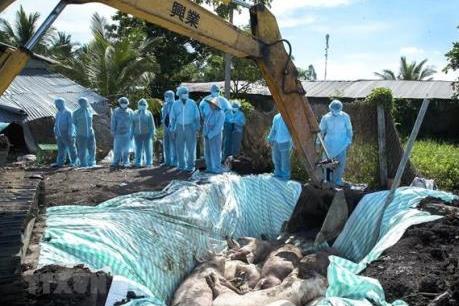 Nam Định cấp gần 150 tỷ đồng hỗ trợ các hộ bị dịch tả lợn châu Phi