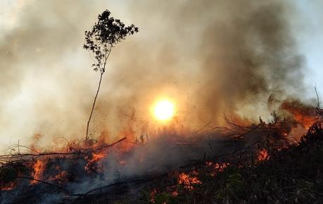 Cháy gần 11 ha rừng tràm và thực bì tại Quảng Trị