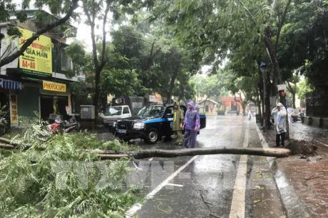 """Ảnh hưởng bão số 3, nhiều cây xanh bị """"quật đổ"""" ở Hà Nội"""