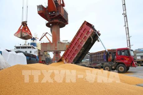 Mỹ xuất khẩu lượng ngô kỷ lục sang Trung Quốc