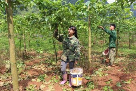 Dấu ấn tín dụng chính sách xã hội trên hành trình giảm nghèo của Cao Bằng