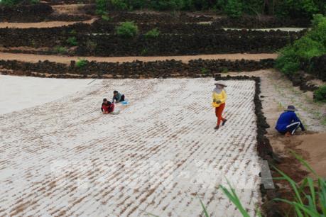 Giá đất nông nghiệp ở Lý Sơn bị thổi lên quá cao