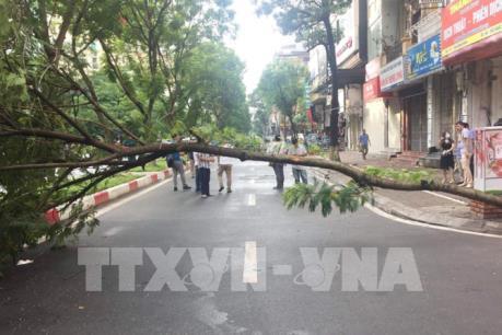 Hà Nội: Để tai nạn do cây đổ không còn là nỗi lo rình rập