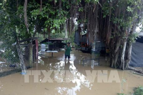 Đồng Nai thiệt hại trên 5.000 tấn cá do mưa lũ