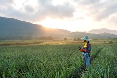 Thái Lan thúc đẩy các dự án phát điện từ cỏ voi