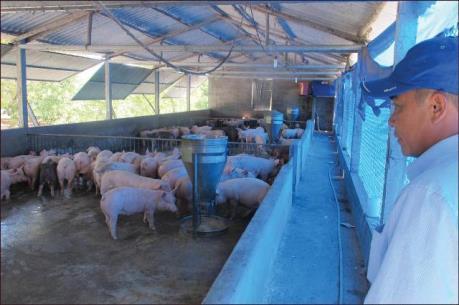 Thừa Thiên - Huế phát triển nông nghiệp ứng dụng công nghệ cao