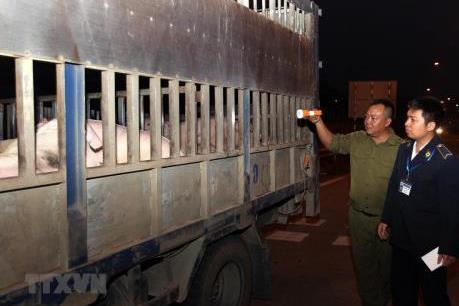 Vận chuyển lợn từ Nam ra Bắc tăng mạnh đột biến