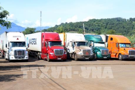Hơn 500 xe container chở thanh long ùn tắc tại Cửa khẩu quốc tế Lào Cai