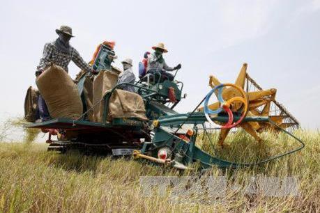 Chương trình đảm bảo giá gạo của Thái Lan sẽ kéo dài trong 1 năm