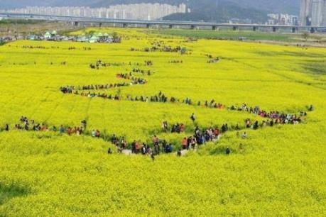 """""""Quên lối về"""" với những lễ hội đặc sắc tại đảo Jeju"""