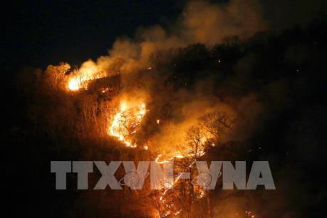 Số vụ cháy rừng ở Brazil xếp thứ ba toàn thế giới trong 48h qua