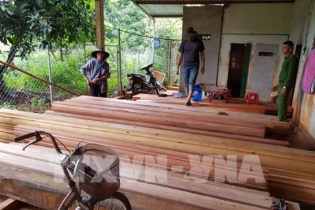Đắk Lắk phát hiện thêm nhiều điểm tập kết gỗ lậu quy mô lớn