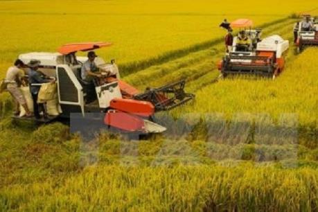 Đồng bằng sông Cửu Long thu hoạch được 65% diện tích lúa Hè Thu